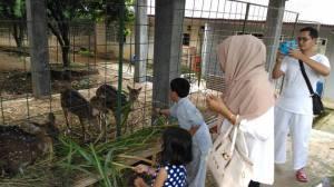 wisata keluarga bogor memberi makan rusa