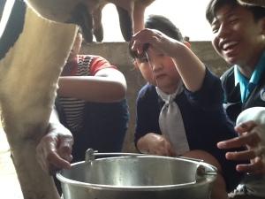 wisata memerah susu di bogor cantik
